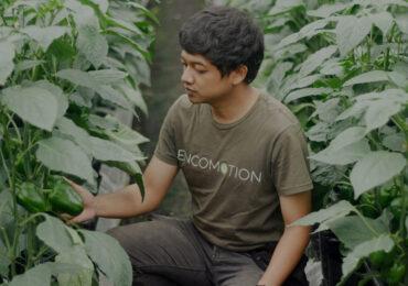 petani milenial sedang mengamati tanamannya