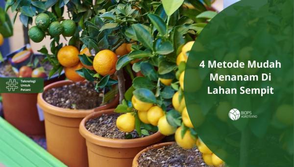 4 Metode Mudah Menanam Di Lahan Sempit